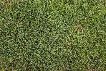 backgrounds - green grass brown spot