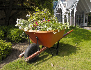 Wheelbarrow with garden refuse