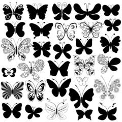 Big collection butterflies