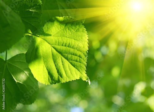 closeup of green leaf and sun beams