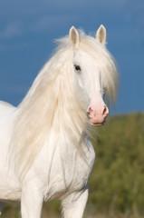 white horse in autumn