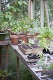 Potting crate on workbench in greenhouse