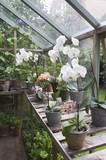 Floweing orchid on greenhouse workbench