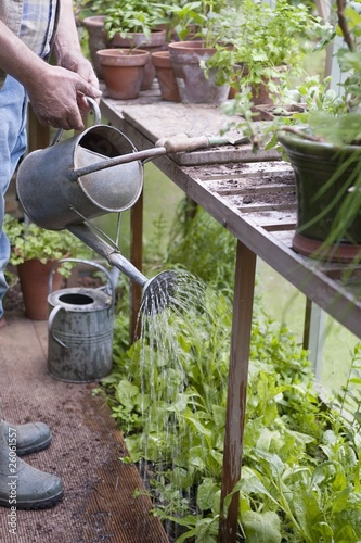 Watering plants in a potting shed