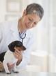 Chinese veterinarian examining dachshund