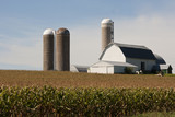 cornfield with a barn and silos