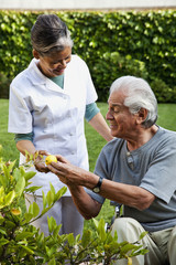 Home nurse and elderly man picking lemons from tree