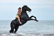 cheval cabré en mer