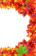 fall frame from colored maple leaves