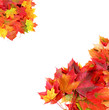 autumn frame from maple leaves