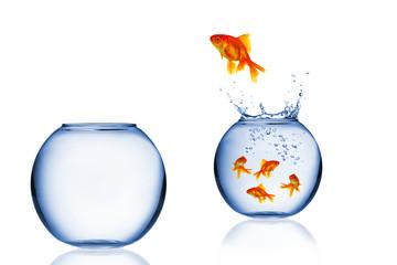 Goldfish jumping out of aquarium