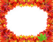 Circular frame from autumn maple foliage