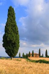 Zypressen mit Haus vor blauem Himmel, Toskana, Italien