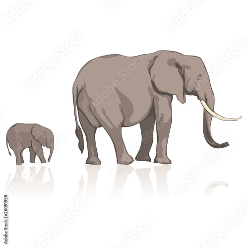 fully editable vector illustration elephants