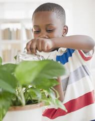 Black boy watering plant