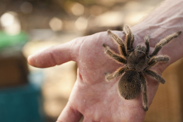 Close up of man's hand holding spider