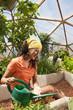 Ecuadorian woman watering plants in greenhouse