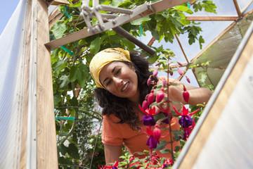 Ecuadorian woman growing flowers in greenhouse