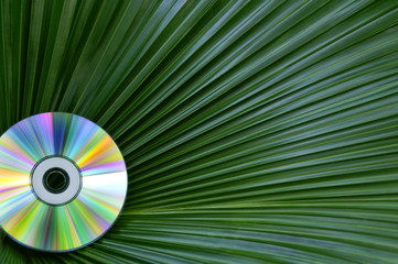 Colorful CD Against Palm Leaf