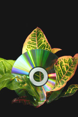 CD Disk and Nature