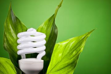 Ampoule économie d'énergie feuille nature