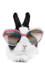 rabbit in sunglasses isolated