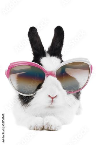 Kaninchen in Sonnenbrille isoliert