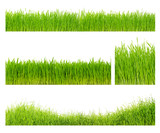 Different  grass