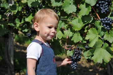Kleines Mädchen mit Weintrauben