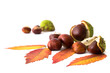 Herbstlaub und Kastanien