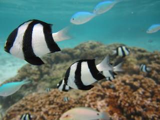 グアム イパオビーチの熱帯魚