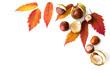 Herbstlaub und Rosskastanien