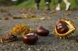 Kastanien - Herbstwanderung