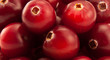 Bunch of vinous cranberries