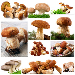 funghi collage