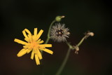 polline poster