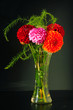 Dahlias in the Vase on the black Background