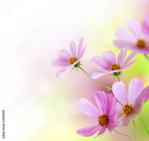 piekne-wiosenne-kwiaty