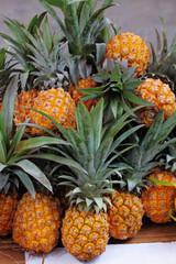 The Sukkoth. Pineapples