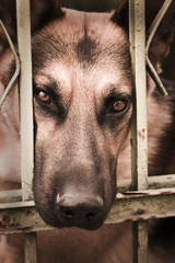 Sad dog behund bars