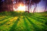 Green park at sunset