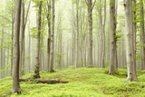 Misty spring forest on the mountain slope - 26154536