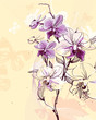 Quadro tender twig blossoming orchids on a light background with butter
