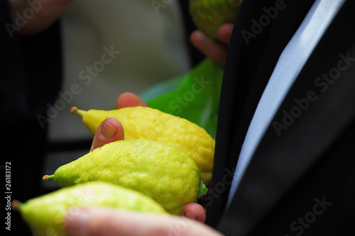Religious Jew chooses plant - citron
