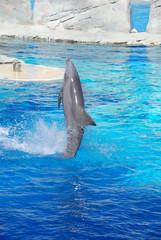 delfino al parco acquatico