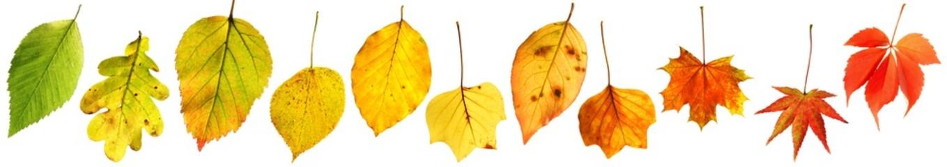 Farbverlauf : Herbstblätter