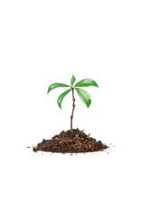 crescita biologica naturale 2