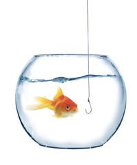 gold fish and empty hook