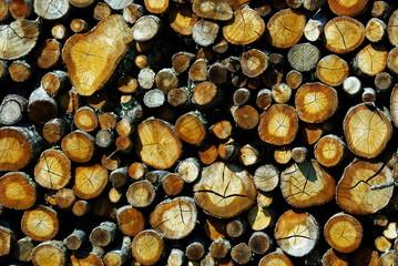 rondins de bois pour l'hiver