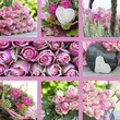 Quadro Collage pink roses